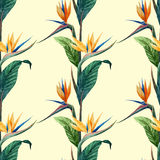 Tropicpattern14 Arkivbilder