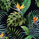 Tropicpattern10 Stock Photos