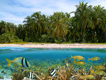 Tropics. Underwater and surface view with beautiful beach and coconuts trees, coral, school of tropical fish, Caribbean Stock Photography