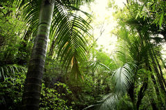 Tropics royalty free stock images