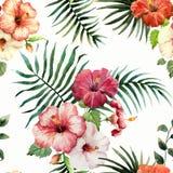 Tropics1 Royaltyfri Fotografi