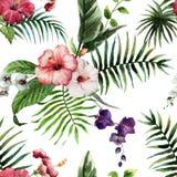 Tropics4 Arkivbilder