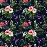 Tropics5 Royaltyfria Bilder
