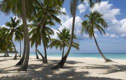 tropics Imagem de Stock Royalty Free