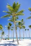 tropics στοκ φωτογραφίες