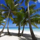 tropics στοκ εικόνα