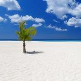tropics imagen de archivo