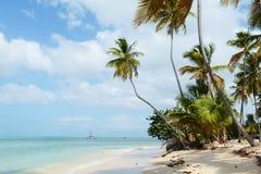 tropics Стоковые Фото