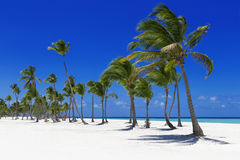 Tropics Royalty Free Stock Photos