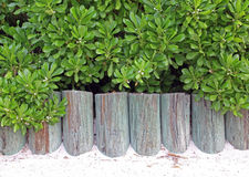 Tropics Beach Wooden Wall Royalty Free Stock Photo