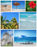 Tropics collage Royalty Free Stock Image