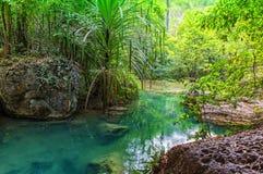 Tropics. Humid tropics in Thailand royalty free stock photo