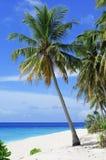 Tropics, Sky, Caribbean, Palm Tree Stock Images