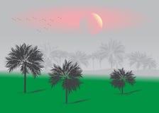 Tropics. Stock Image