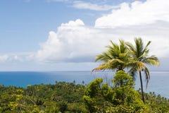 tropików brazylii Obrazy Stock