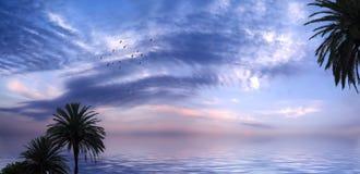 tropikal的日落 免版税库存图片