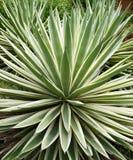tropikalna aloes roślina Zdjęcia Royalty Free