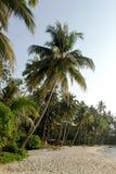 tropikalna Bali natura Indonesia Zdjęcia Stock