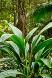 Tropikalna długa liść rośliny natura obraz stock