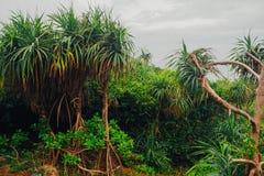 Tropikalna dżungla z rzeką Obraz Stock