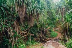 Tropikalna dżungla z rzeką Zdjęcia Royalty Free