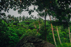 Tropikalna dżungla z rzeką Fotografia Royalty Free