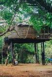 Tropikalna dżungla z rzeką Zdjęcia Stock