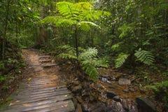 Tropikalna dżungla Zdjęcia Royalty Free