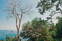 Tropikalna dżungla Fotografia Royalty Free