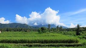 Tropikalna d?ungla i pasmo g?rskie na Bali wyspie w Indonezja zdjęcia royalty free