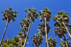 Tropikalna i summery atmosfera w opromienionym dniu Zdjęcie Royalty Free