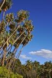 Tropikalna i summery atmosfera w opromienionym dniu Fotografia Royalty Free