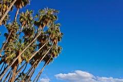 Tropikalna i summery atmosfera w opromienionym dniu Obraz Stock