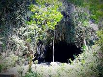 Tropikalna jama zdjęcia royalty free
