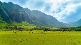 Tropikalna Kahana dolina Fotografia Stock