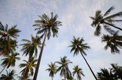 Tropikalna kokosowa palma Fotografia Royalty Free