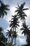 Tropikalna Kokosowa sylwetka Przeciw niebieskiemu niebu Fotografia Royalty Free