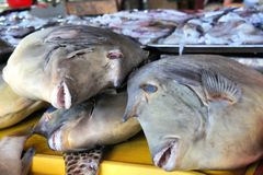 Tropikalna kolorowa ryba dla sprzedaży w rynku Zdjęcie Stock