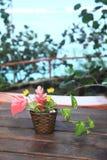 Rośliny 3 & drzewo Fotografia Royalty Free