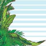 Tropikalna Kwiecista rama z błękitnymi stipes Zdjęcie Royalty Free
