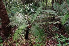 Tropikalna las tropikalny sceneria, ekosystem obrazy royalty free
