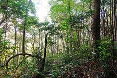 Tropikalna las tropikalny sceneria, ekosystem, Tajlandia zdjęcie stock