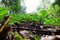 Tropikalna las tropikalny sceneria, ekosystem, Tajlandia fotografia stock