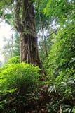 Tropikalna las tropikalny sceneria, ekosystem, Tajlandia obraz royalty free