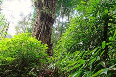 Tropikalna las tropikalny sceneria, ekosystem, Tajlandia obrazy stock