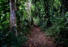 Tropikalna lasowa ścieżka w Kauai Hawaje Zdjęcie Royalty Free