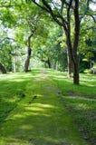 tropikalna lasowa mistyczna ścieżka Obrazy Royalty Free