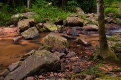 Tropikalna lasowa rzeka. Obrazy Stock