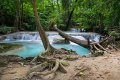 tropikalna lasowa sceneria Obrazy Stock