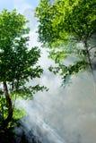 tropikalna lasowa sceneria zdjęcie stock